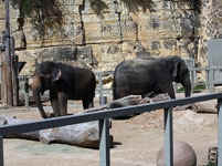2011 Top Ten Worst Zoos For Elephants An Animal Rights