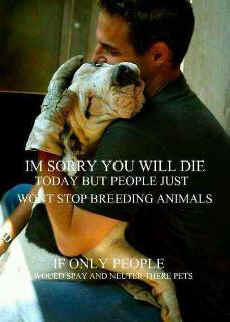 February 28, 2012 - Animals in Print - Stop breeding dogs and cats