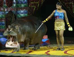 greece bans circus animals