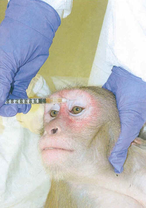 University of Florida primate vivisection torture