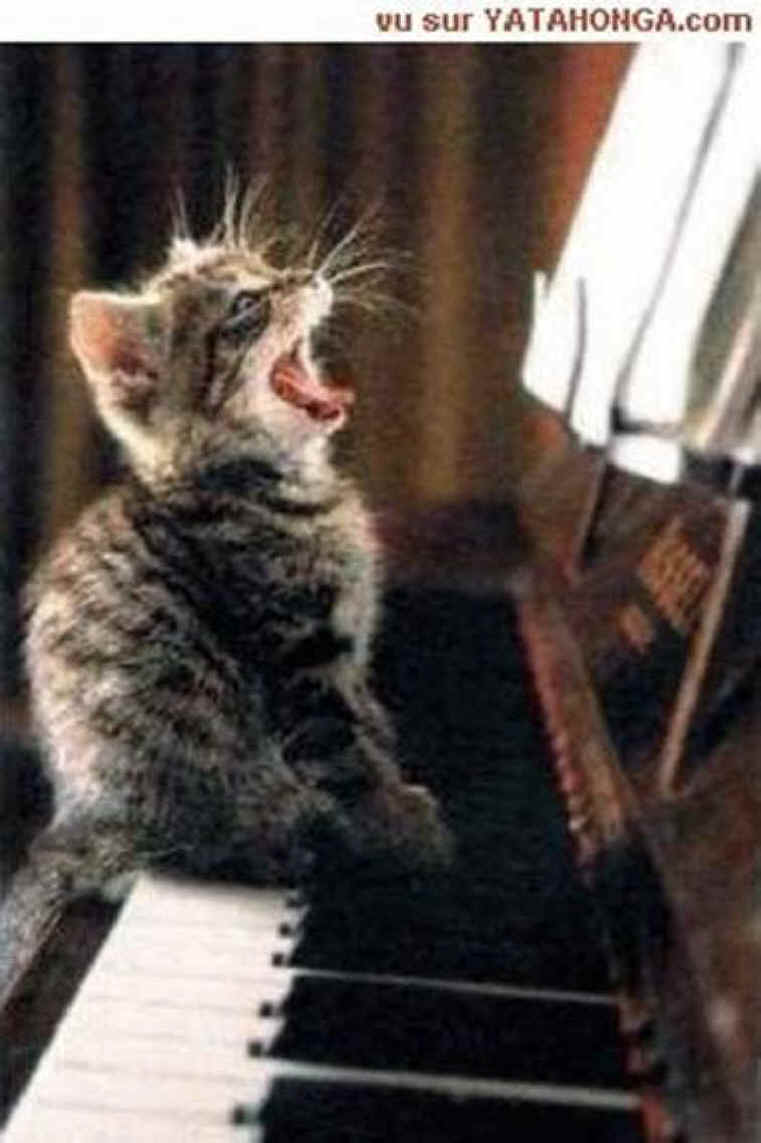 Singing Kitty - From Animals In Print 19 March 2006 Issue