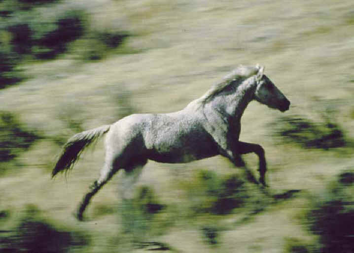 Symbol of American Freedom - America's Wild Horses - From ...