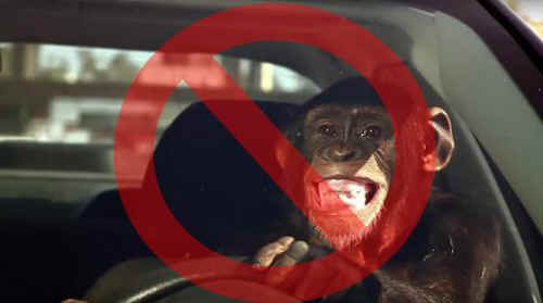 Tell Suburban Auto Group To Ditch The Trunk Monkey An All