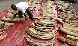 end ivory trade