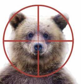grizzly bear target