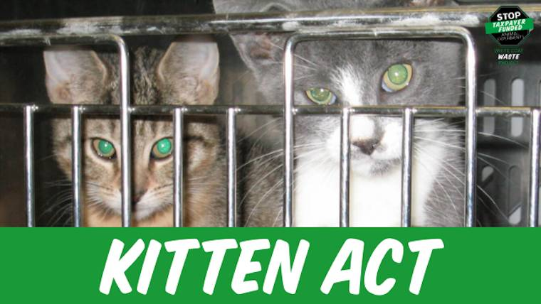 USDA kitten slaughterhouse