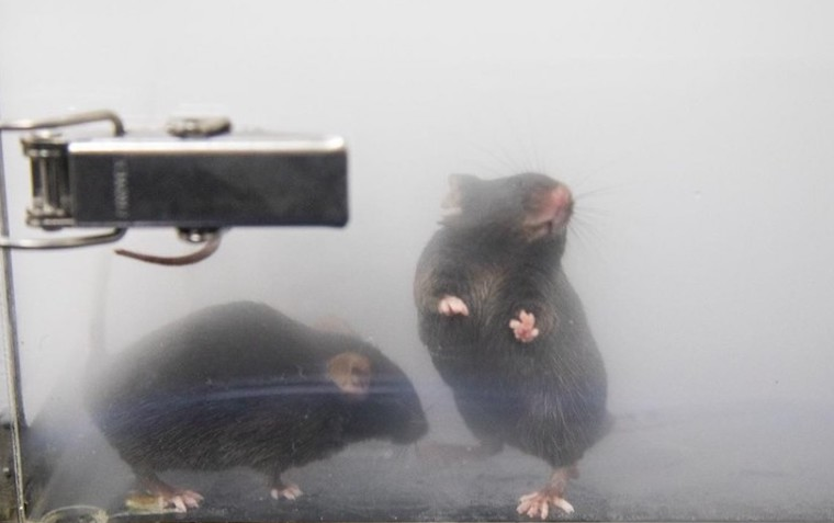 mice vaping experiments