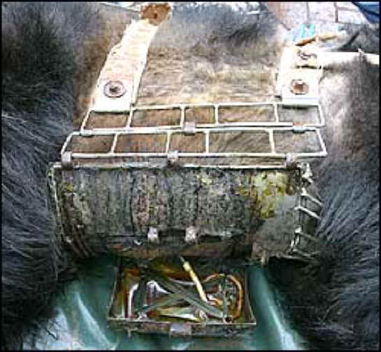 Bear Bile Farms