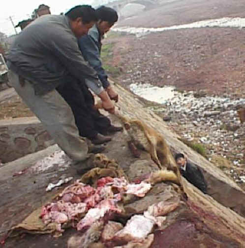 the matter of exploitation of animals Why animals matter in the  adherent is to truly take his religious commitments seriously ideally he should abstain from any exploitation of any animal if in.