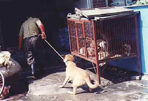 http://www.all-creatures.org/anex/dog-meat-18.jpg
