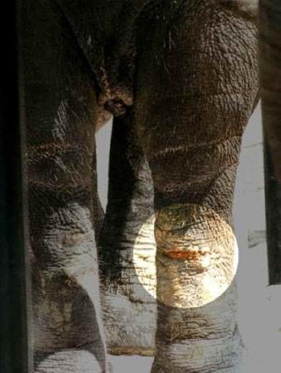 Elephant Education