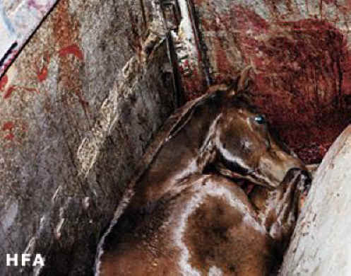a study of horse slaughter the uses of a dead horse Composting may be alternative in wake of horse slaughter bill date: october 12, 2006 using dead horses that would otherwise have gone to the landfill.