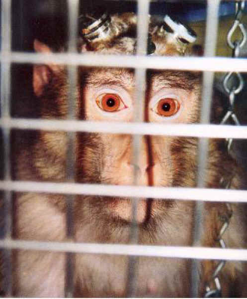 http://www.all-creatures.org/anex/monkey-cage-01.jpg