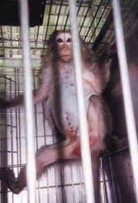 monkey-cage-05_small.jpg