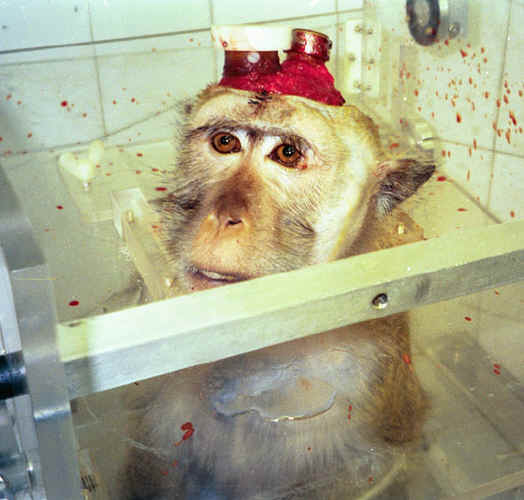 http://www.all-creatures.org/anex/monkey-malish-07.jpg