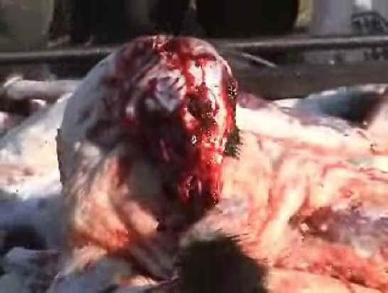 Human skinned alive - photo#5