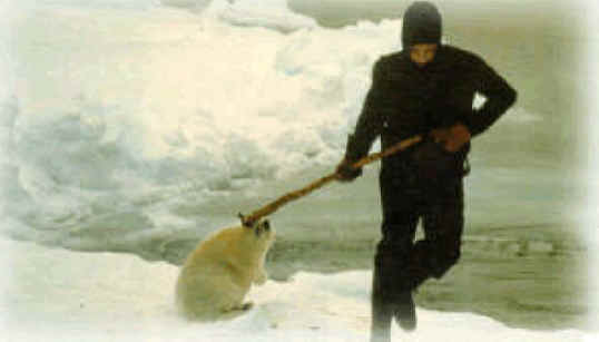http://www.all-creatures.org/anex/seal-fur-09.jpg