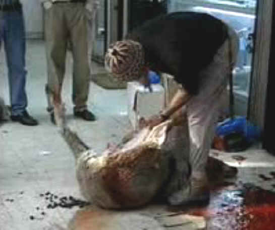http://www.all-creatures.org/anex/sheep-slaughter-16.jpg
