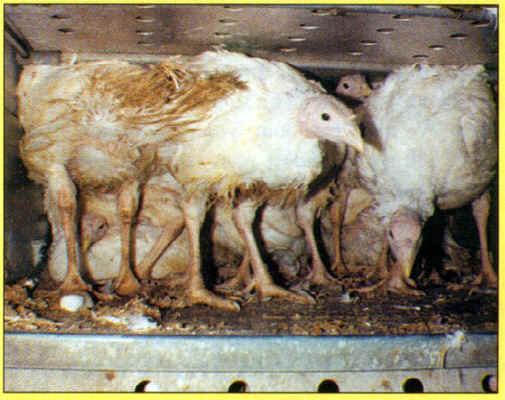 Animal exploitation