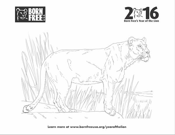 born free 39 s lion activities and lesson plans for kids animal rights activism articles archive. Black Bedroom Furniture Sets. Home Design Ideas