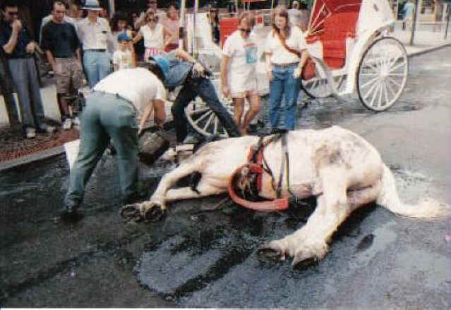 15 august 1988 too hot to trot a horse
