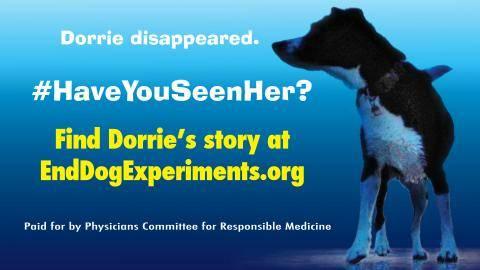 finding dorrie