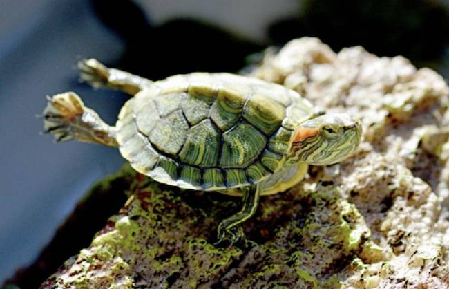 70 Hatchling Turtles Rescued From Chinatown S Live Animal