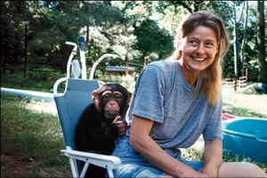 Travis, Tragedy and the Other Chimpanzees
