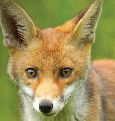 the case against hunting with dogs an animal rights article from