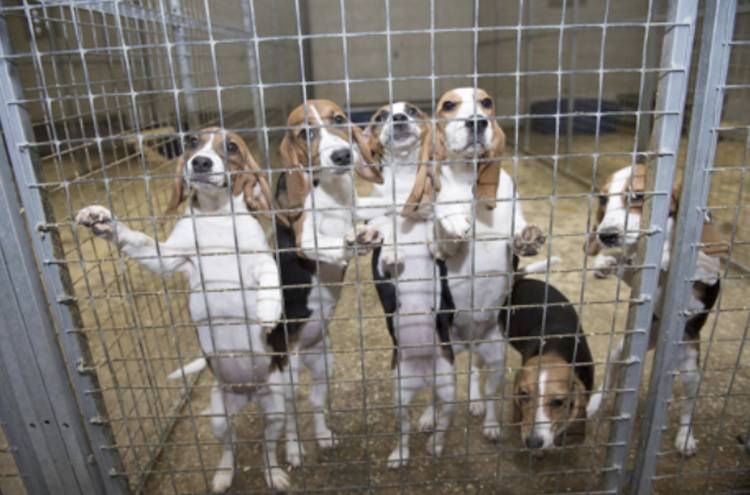 Dog Breeding Laws Uk