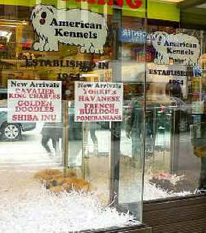 Best Friends Volunteers Protest Pet Stores That Buy Puppies From