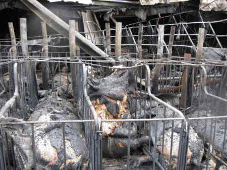 Quot Barn Quot Fires Kill 23 000 Animals In Four Days