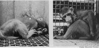 maternal, deprivation, Harry Harlow, vivisection