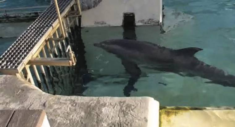 Incidents At Seaworld Parks: Dolphin Exploitation And Suffering At Seaworld Parks