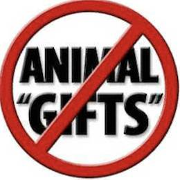 gifting animals