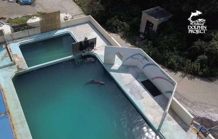 Update on Abandoned Dolphin, Honey