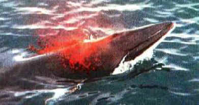 proxy - Stop Whale Hunting In Iceland - European Union EU