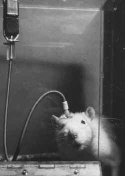 vivisection neuroscience James Holmes