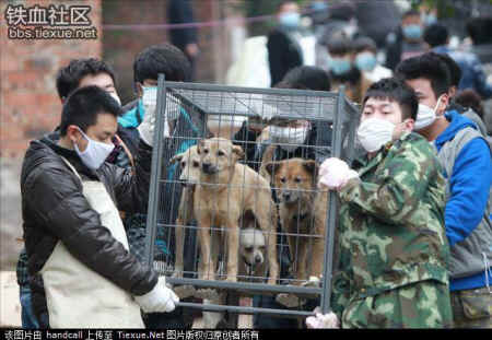 dog cat rescue Mr. Chen Chinese activists