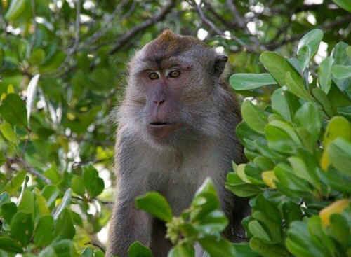 PETA monkey transport vivisection Air China