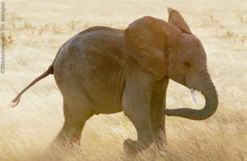 Baby Elephants Cute peta baby elephant