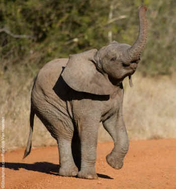 Cute baby elephants born to be wild an animal rights article from
