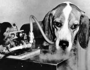 animal testing nations Despite that animal testing in cosmetics has proven to be inaccurate and  inefficient, 80 percent of countries still have no laws against it—but.