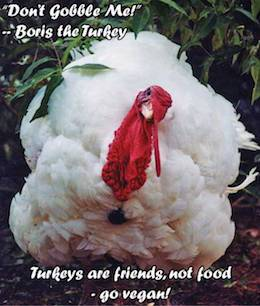 Boris turkey