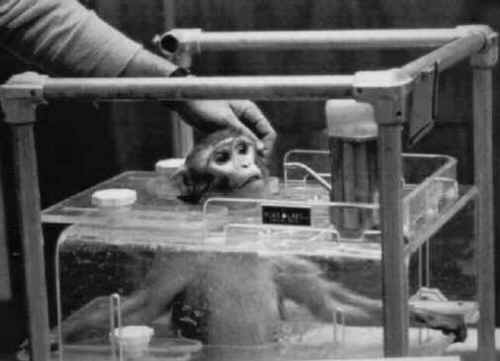 argument animals experiment So here is a short list (which we will be adding to over time) of reasons to support  animal experiments in general the physiological systems of humans and.