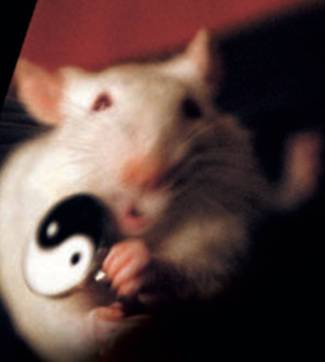 animal vivisection articles