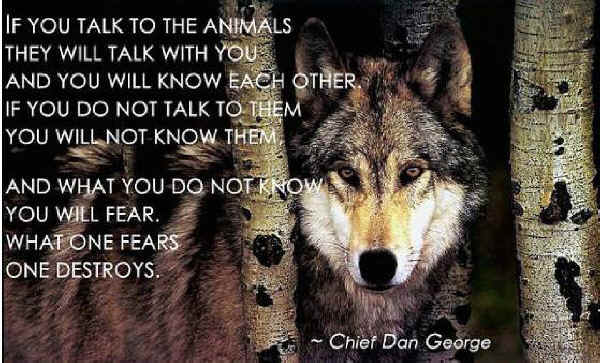 Dan Wolfe Quotes: Wolves And Human Well-being