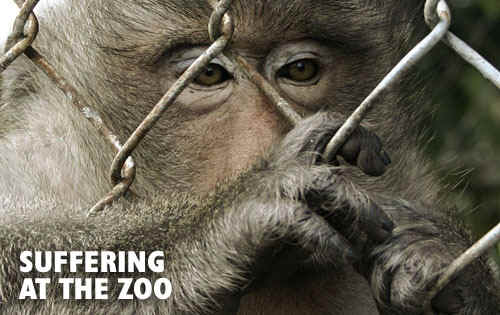 articles on animal cruelty in zoos