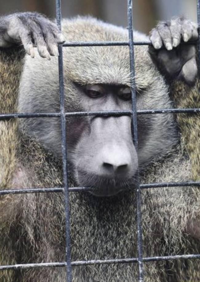 a discussion on the morality of zoos Even so, there are good reasons for why zoos should continue to keep them there is a moral argument for keeping great apes in zoos   aeon ideas we're turning 6.