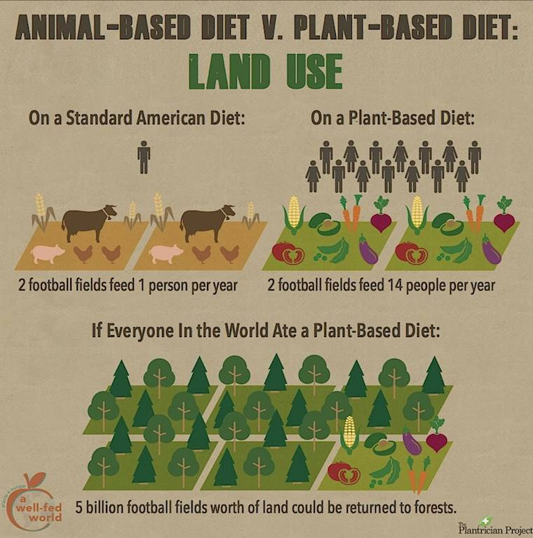Image of: Turkey World Animal Foundation Animalbased Diet V Plantbased Diet Land Use